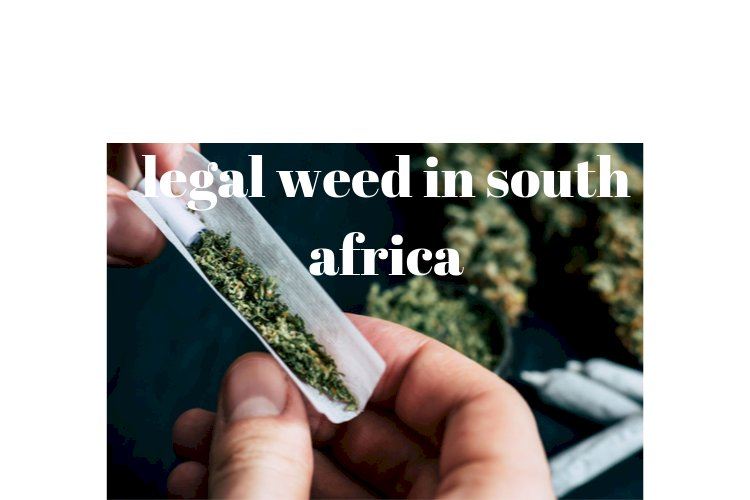 THE NUMBERS OF THE LEGAL WEED INDUSTRY IN SOUTH AFRICA RIGHT NOW